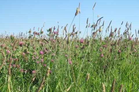 ELCR Pics - Masterson 001 ecology crop