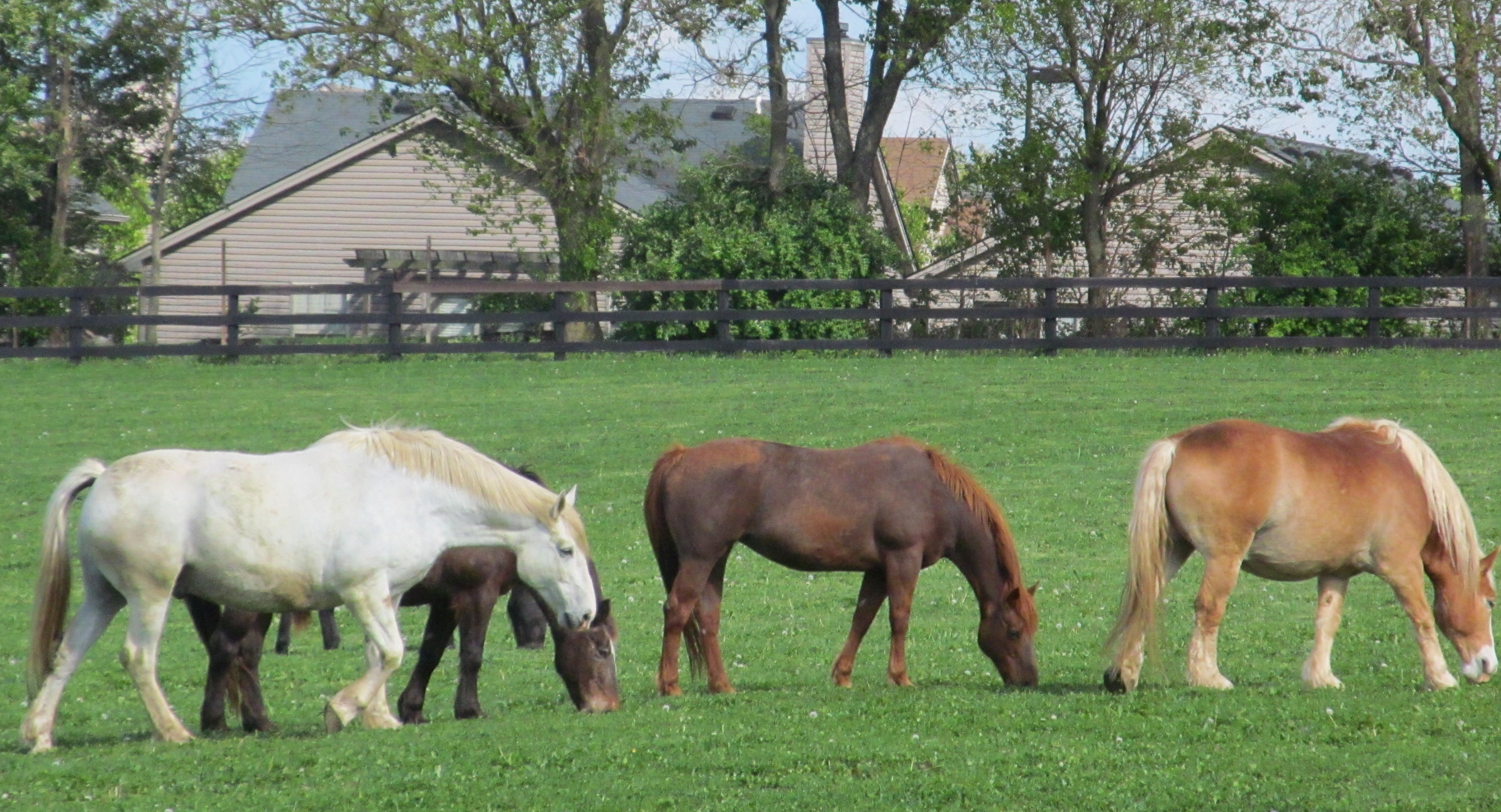 New Development & Horses Surrounded By Dev crop