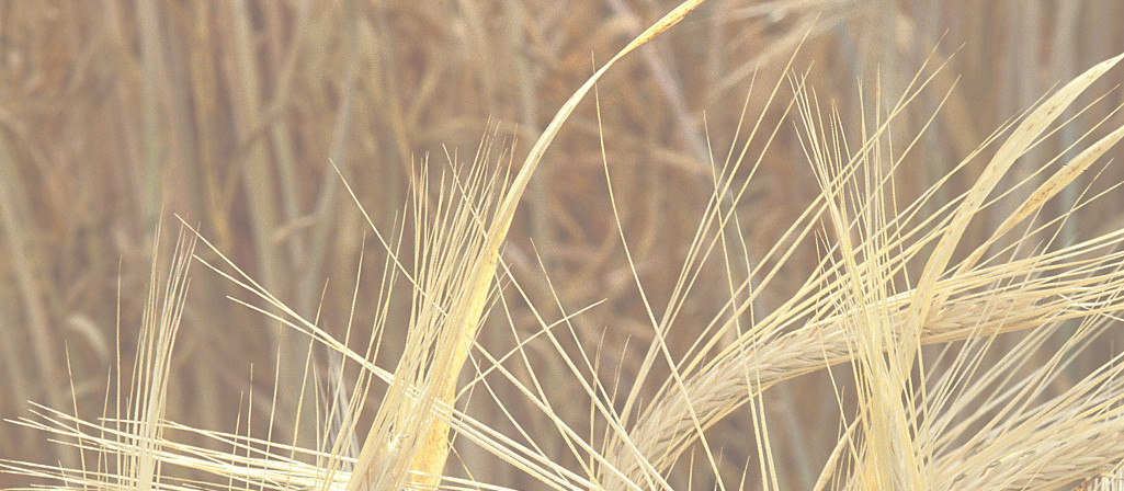 wheattrans2 newsletterspage
