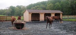area di sacrificio credito University of Maryland Equine Rotational Grazing Demonstration Farm
