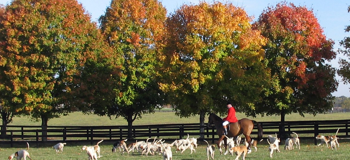 Directory of Equine Activity and Recreational Use Statutes for Horsemen and Landowners