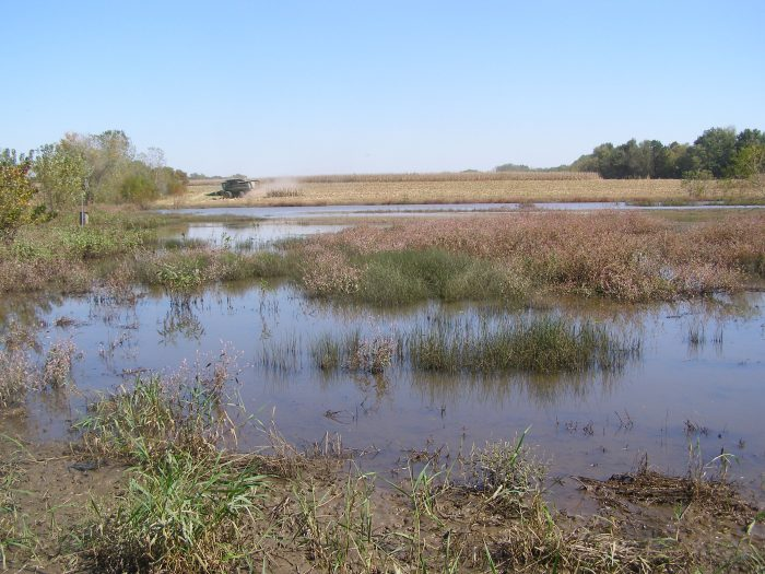 Understanding the Value of Wetlands on Equine Land