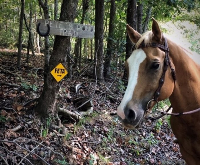 Private Equestrian Trail Systems: Viable Options for Fragmented Landscapes